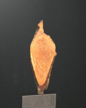 Kleines Wandbild Elsbeere