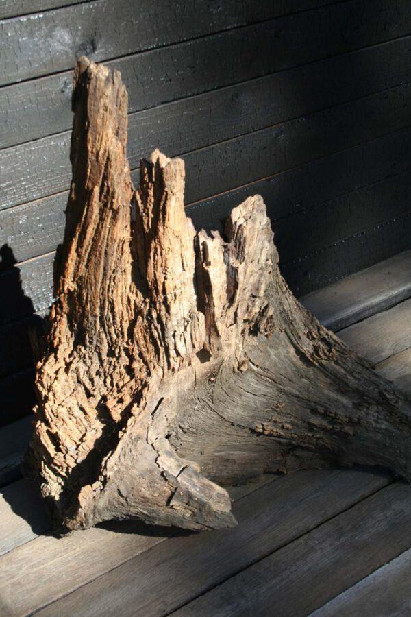 Wurzelausläufer einer Mooreiche Holzkunst