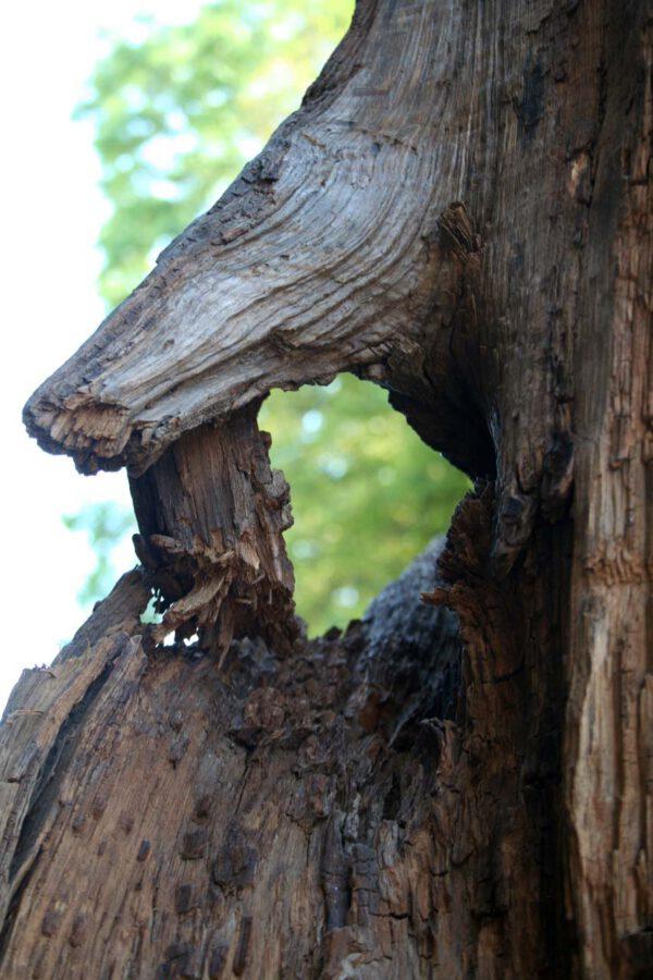 Mooreiche Holzskulptur Lavastrom
