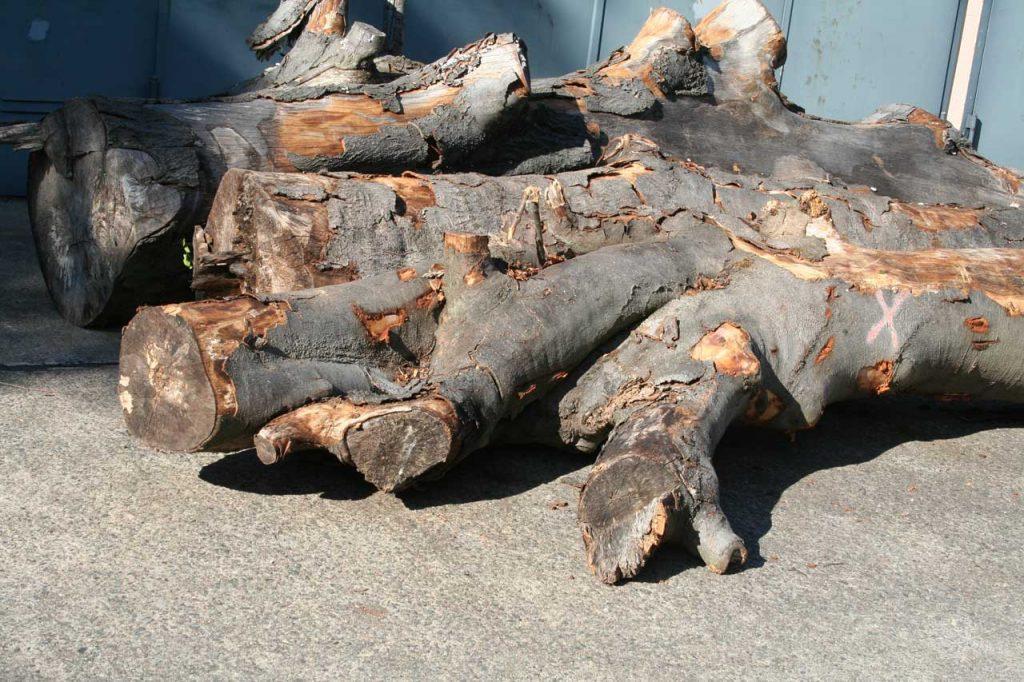 Buchenstämme Holzpolter