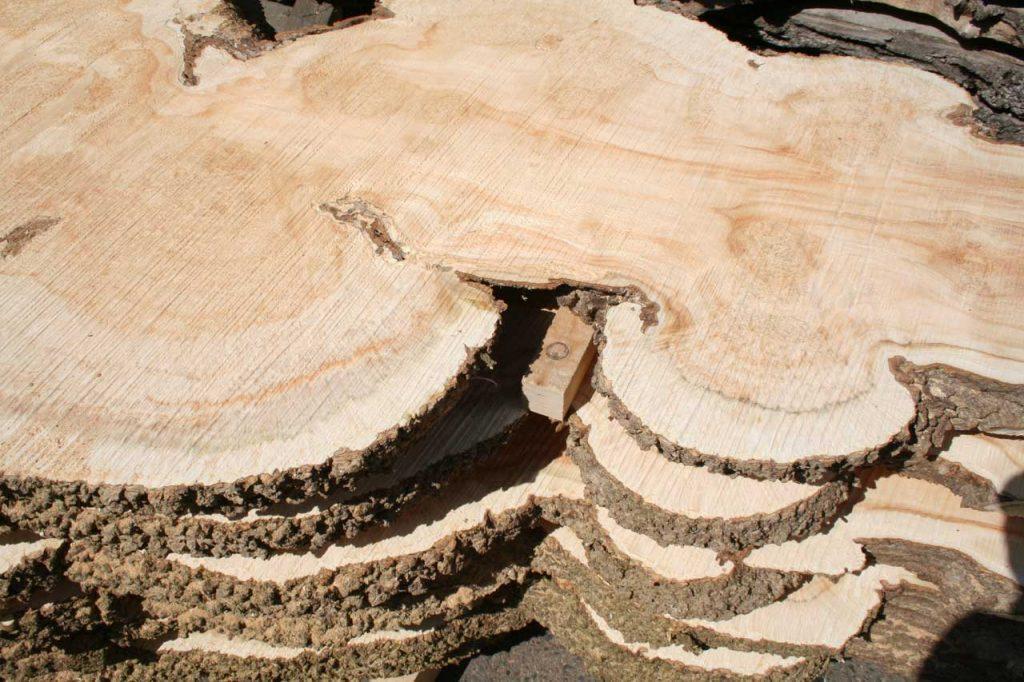 Maserknollen Tischplatten Massivholz