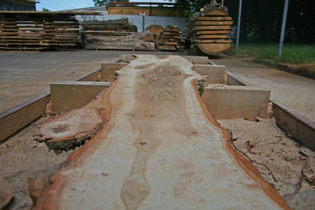 Pappel Massivholzbohle