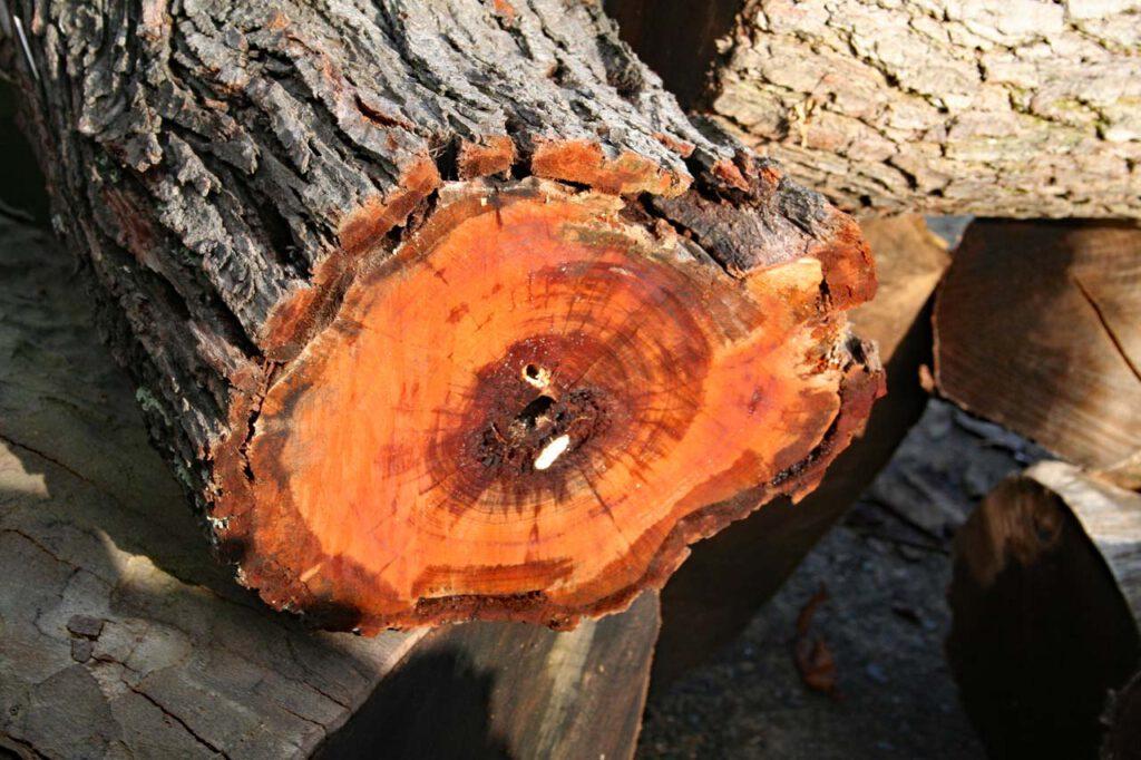 Obsthölzer Pflaume Pflaumenbaum