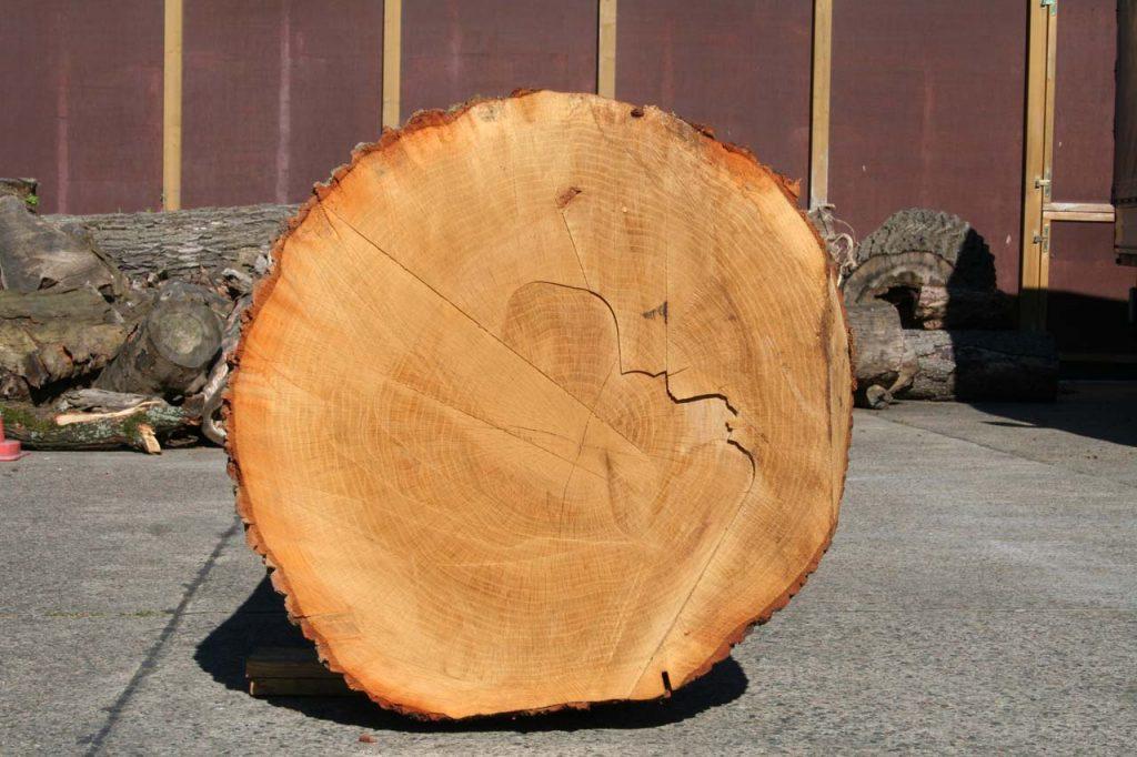 Eichenstammholz